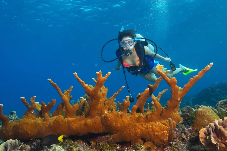 Unawatuna Scuba Diving Packages
