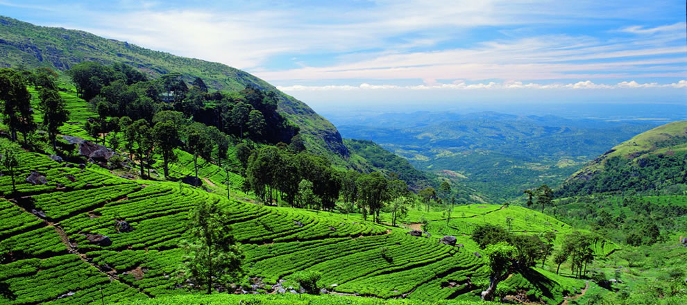 A Blend Of Tea And Culture Tours And Guides In Sri Lanka